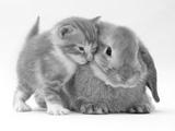 Domestic Kitten (Felis Catus) Next to Bunny  Domestic Rabbit