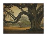 Two Oaks in Rain  Audubon Gardens