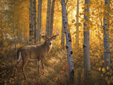 Whitetail in Aspens