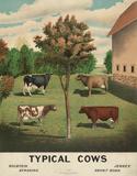 Typical Cows, c. 1904 Reproduction d'art par Vintage Reproduction