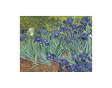 Iris au jardin Reproduction d'art par Vincent Van Gogh