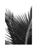 Palms 12