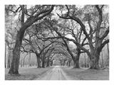 Oak Arches