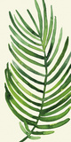 Tropical Palm Leaf IV