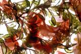 Hibiscus Coleus Array  2009
