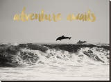 Dolphins Adventure Awaits Golden