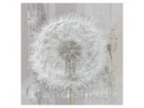 Silver Parachute