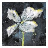White Flower on Black 3