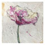 Pink Poppy on White 3
