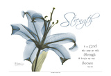 Lily Strength