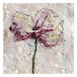 Pink Poppy on White 2
