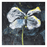White Flower on Black 1