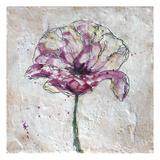 Pink Poppy on White