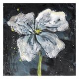 White Flower on Black 2