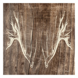 Antlers Reproduction d'art par Alonza Saunders