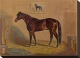 America's Renowned Stallions  c 1876 III