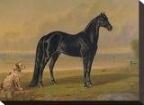 America's Renowned Stallions  c 1876 I
