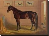 America's Renowned Stallions  c 1876 IV