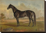America's Renowned Stallions  c 1876 II