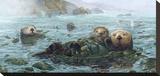 Carmel Coast Otters