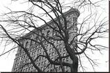 Flatiron with Tree (b/w)