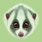 Illustrated Portrait of Slow Loris