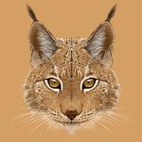 Illustrative Portrait of Lynx Cute Wild Cat of Eurasia