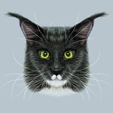 Vector Illustrative Portrait of Maine Coon Cute Bi-Colour Domestic Cat with Green Eyes