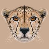 Illustrative Portrait of a Cheetah the Cute Face of a Cheetah