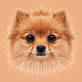 Illustrative Portrait of Pom Pom Cute Head of a Sable Pomeranian Spitz Dog