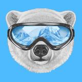 Portrait of Polar Bear with Ski Goggles Hand Drawn Illustration