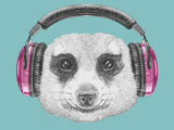 Portrait of Mongoose with Headphones Hand Drawn Illustration