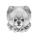 Original Drawing of Pomeranian Dog with Roses Isolated on White Background
