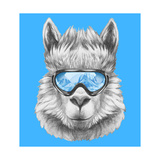 Portrait of Lama with Ski Goggles Hand Drawn Illustration