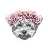 Original Drawing of Maltese Poodle with Floral Head Wreath Isolated on White Background