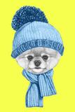 Portrait of Pomeranian with Santa Hat Hand Drawn Illustration