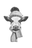 Portrait of Cow with Scarf and Hat. Hand Drawn Illustration. Reproduction d'art par Victoria_novak