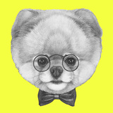 Original Drawing of Pomeranian Dog with Glasses and Bow Tie Isolated on Colored Background