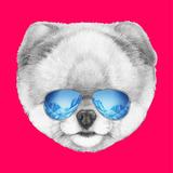Portrait of Pomeranian with Mirror Sunglasses Hand Drawn Illustration