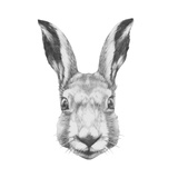 Original Drawing of Rabbit Isolated on White Background