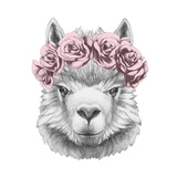 Portrait of Lama with Floral Head Wreath Hand Drawn Illustration
