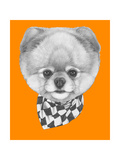 Original Drawing of Pomeranian Dog with Scarf Isolated on Colored Background