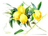 Lemon Bunch