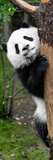 China 10MKm2 Collection - Giant Panda Baby