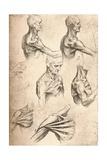 Anatomical Drawing  C1472-C1519 (1883)