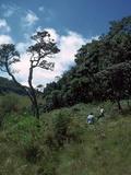 View of the Horton Plains Nature Reserve