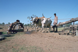 Persian Water Wheel  Rajasthan  India