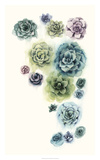 Succulent Cluster I