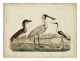 Avocet & Boat-Billed Heron