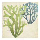 Seaweed Overlay II